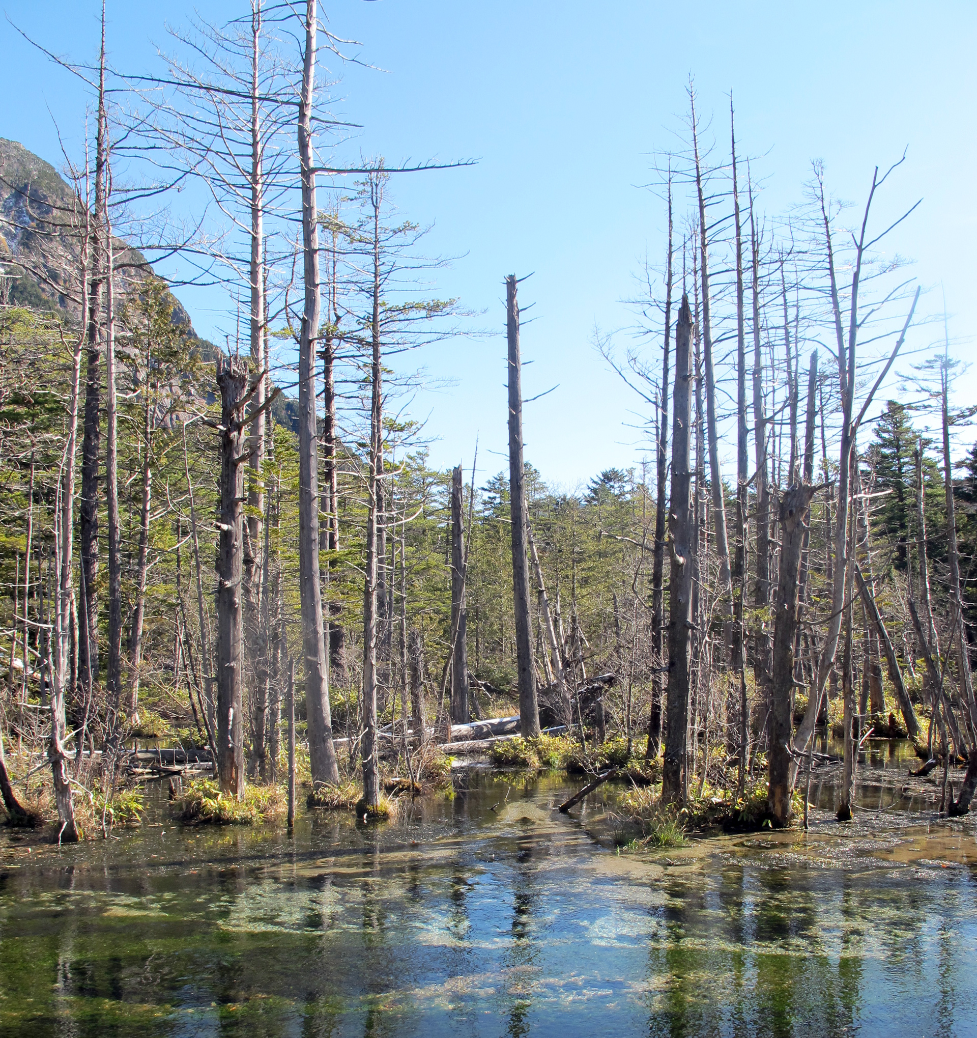Kamikochi-dead-tree-pond