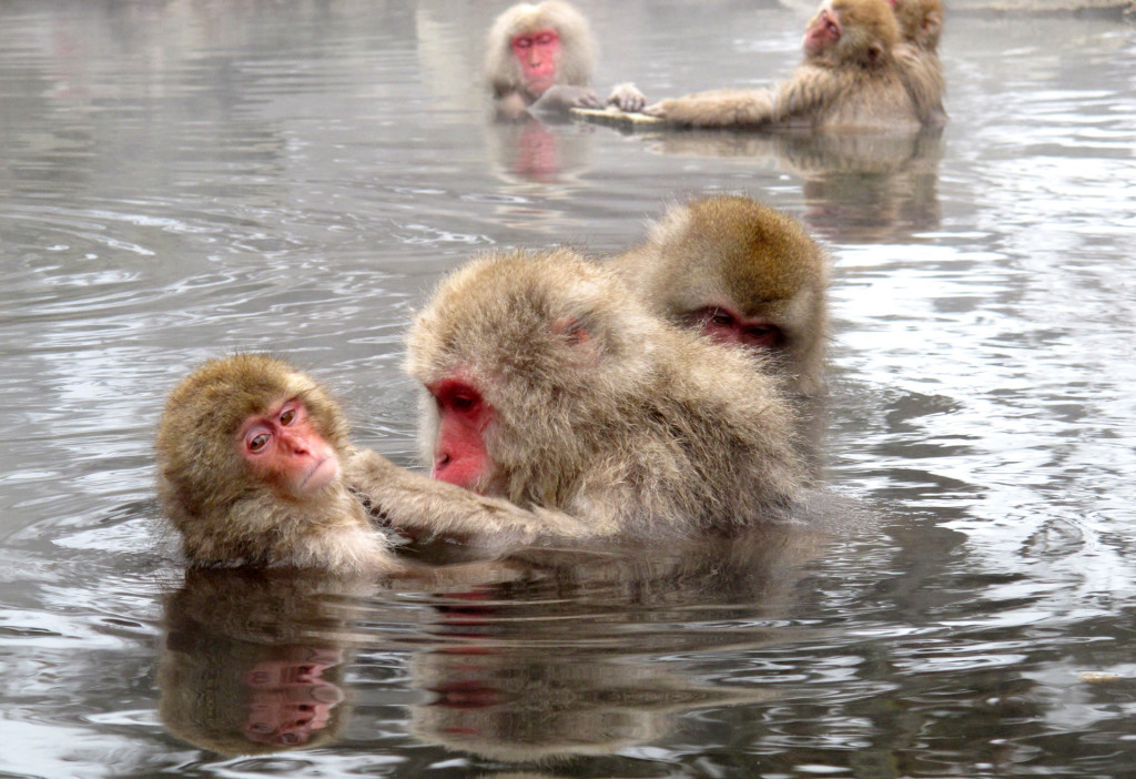 Snow-Monkeys-1