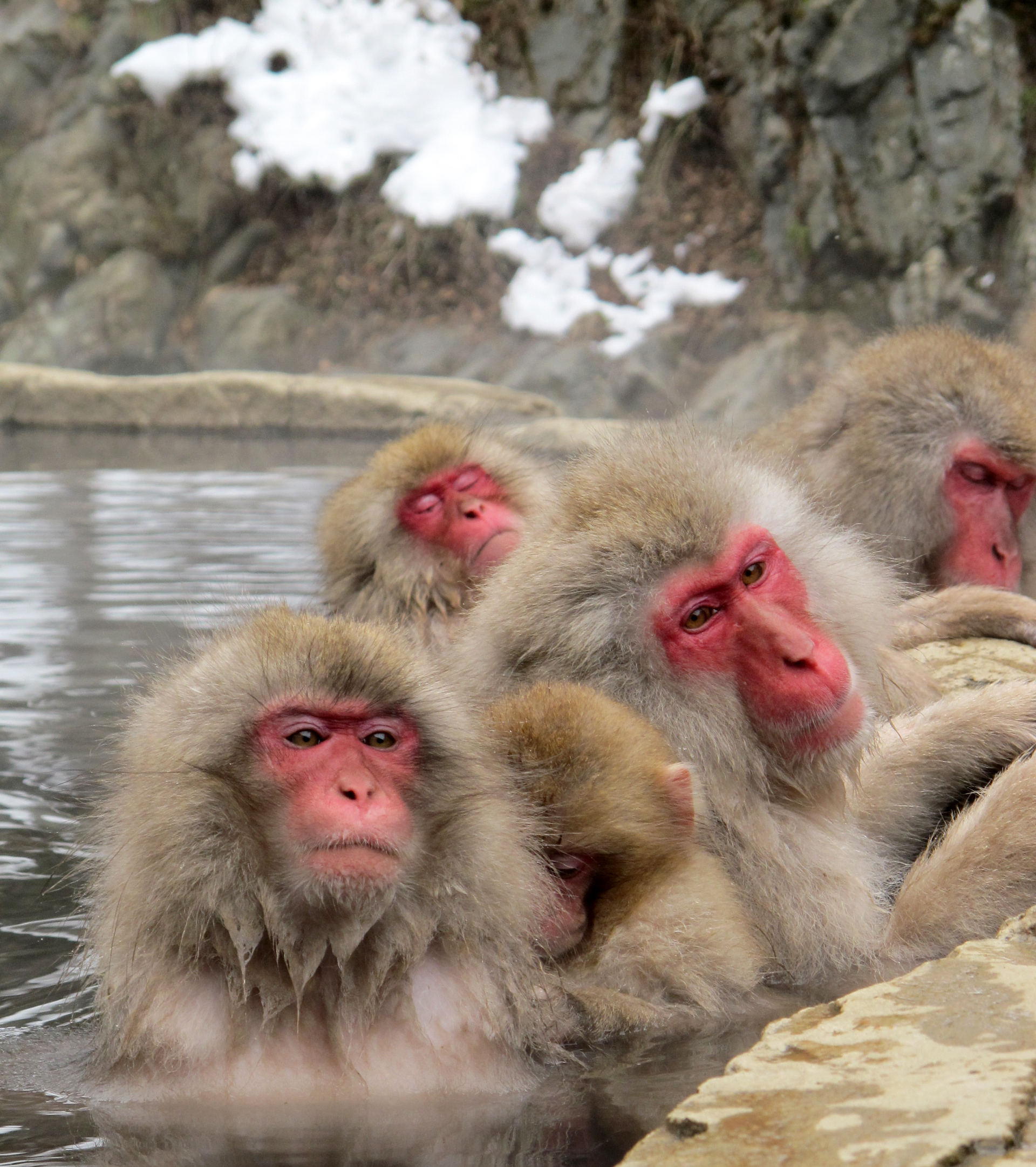 Snow-Monkeys-2