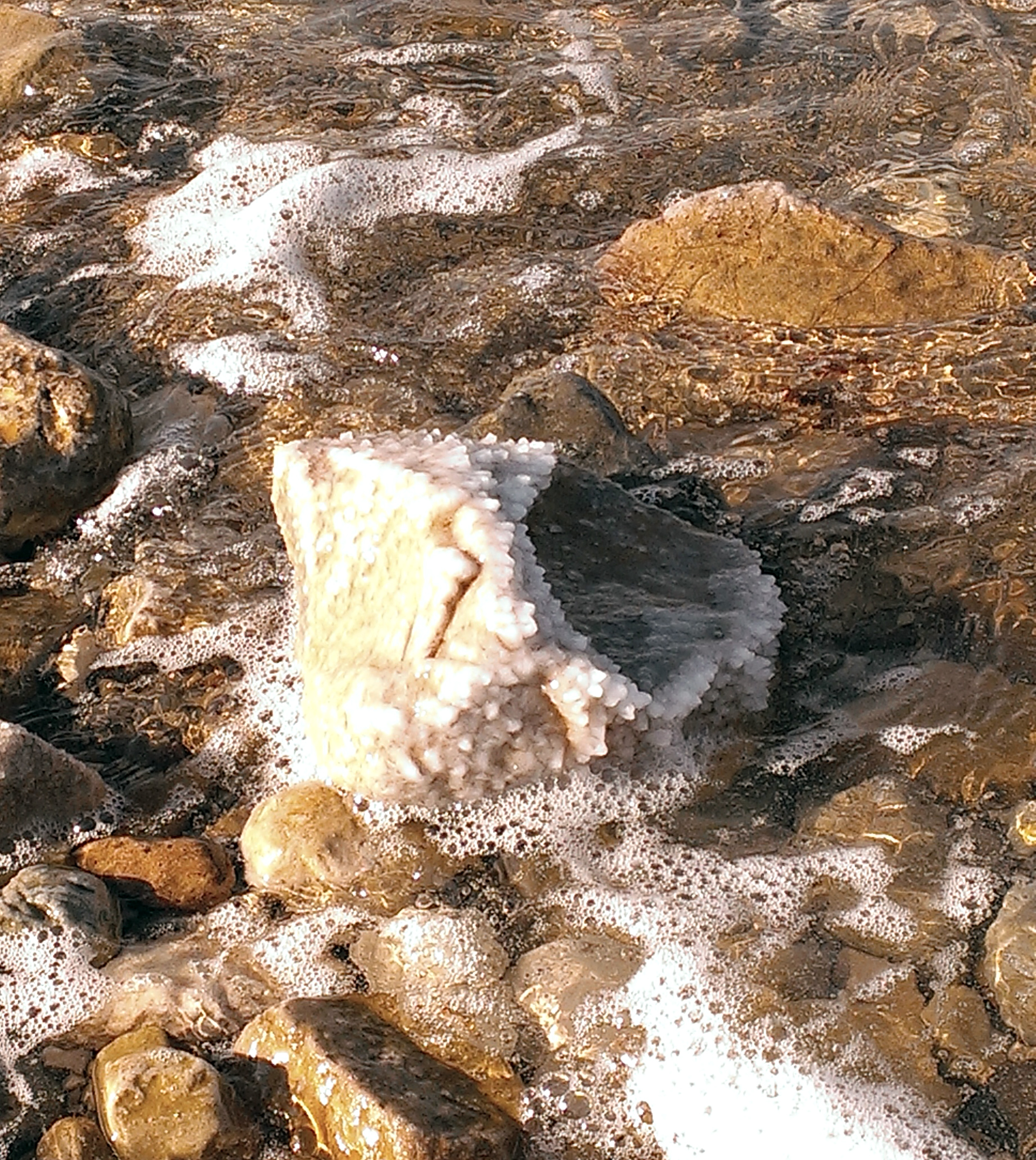 Dead-Sea-salty