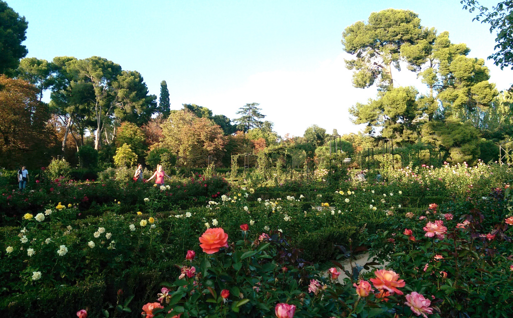 Madrid---rose-garden