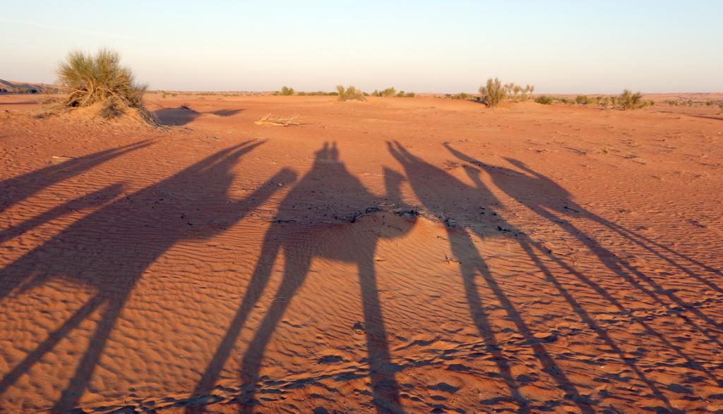 Al-Maha-camel-trek