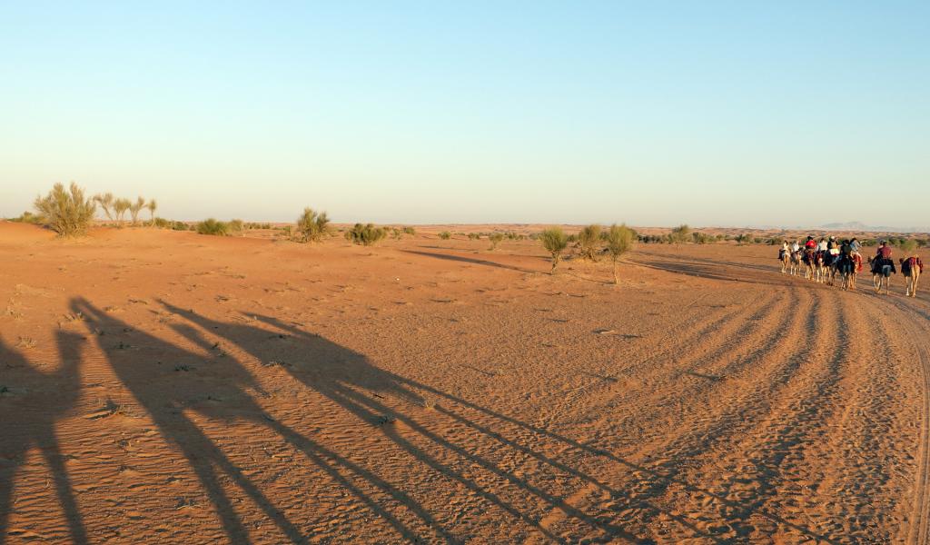 Al-Maha---camel-trek(2)