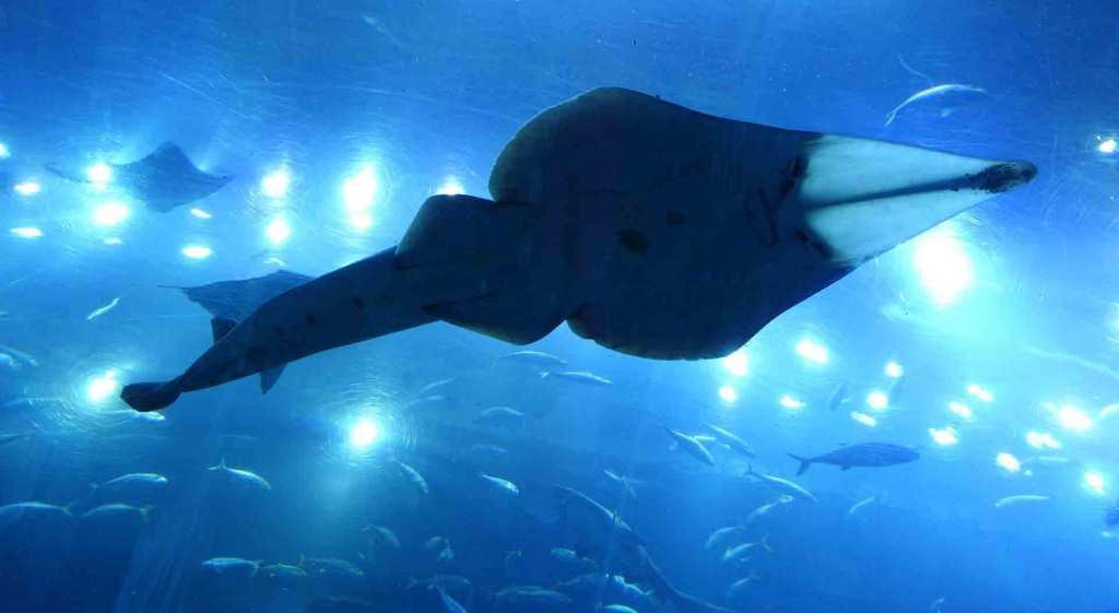 Dubai-Aquarium-(3(