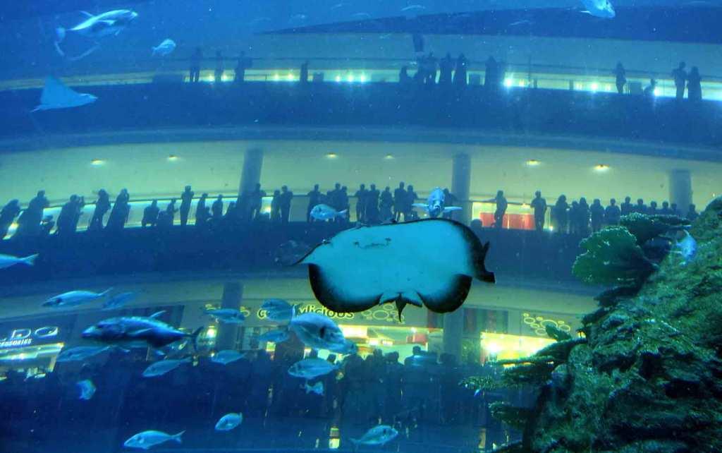 Dubai-Aquarium-(5)