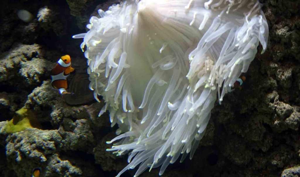 Dubai-Aquarium-Cloud-fish
