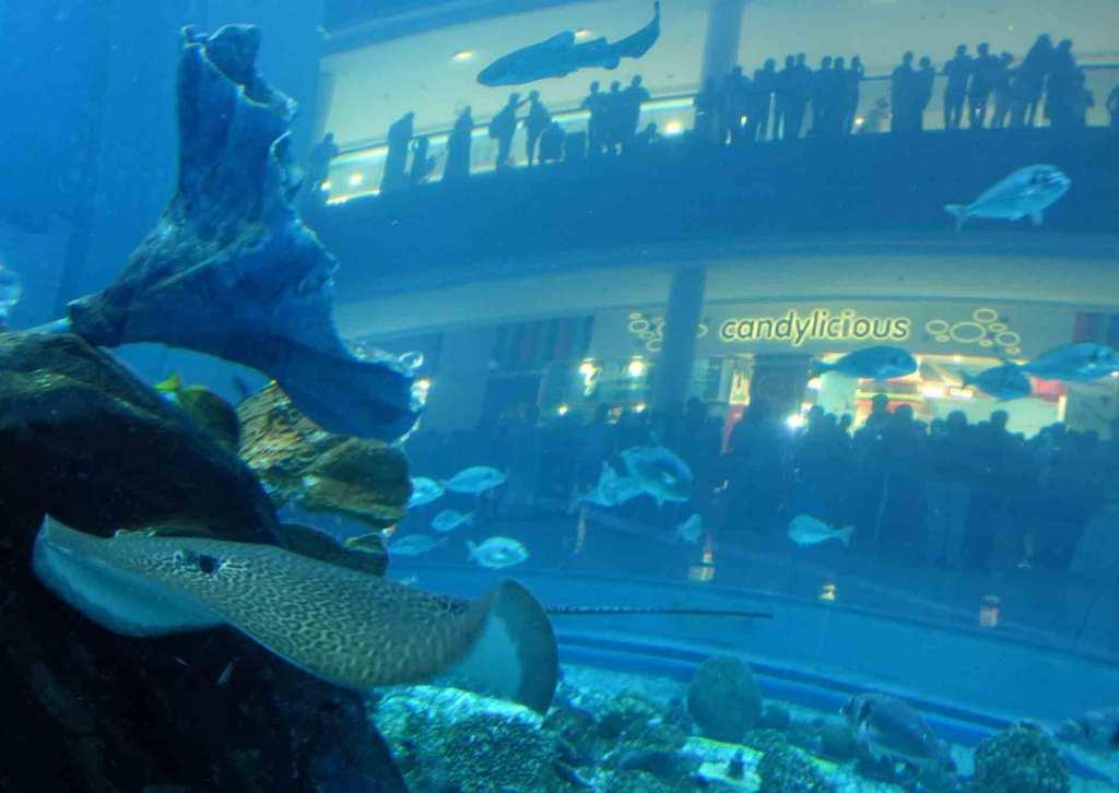 Dubai-Aquarium-(leopard-ray)