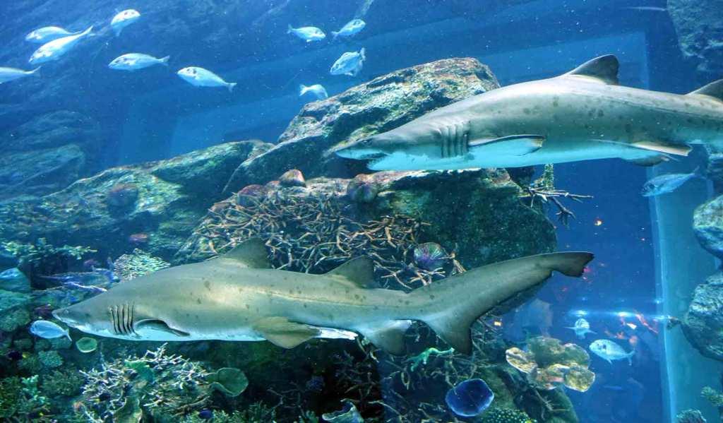 Dubai-Aquarium-(sharks)