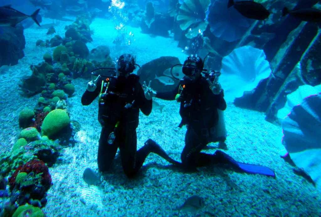 Dubai-diving-Dubai-Mall-Aquarium