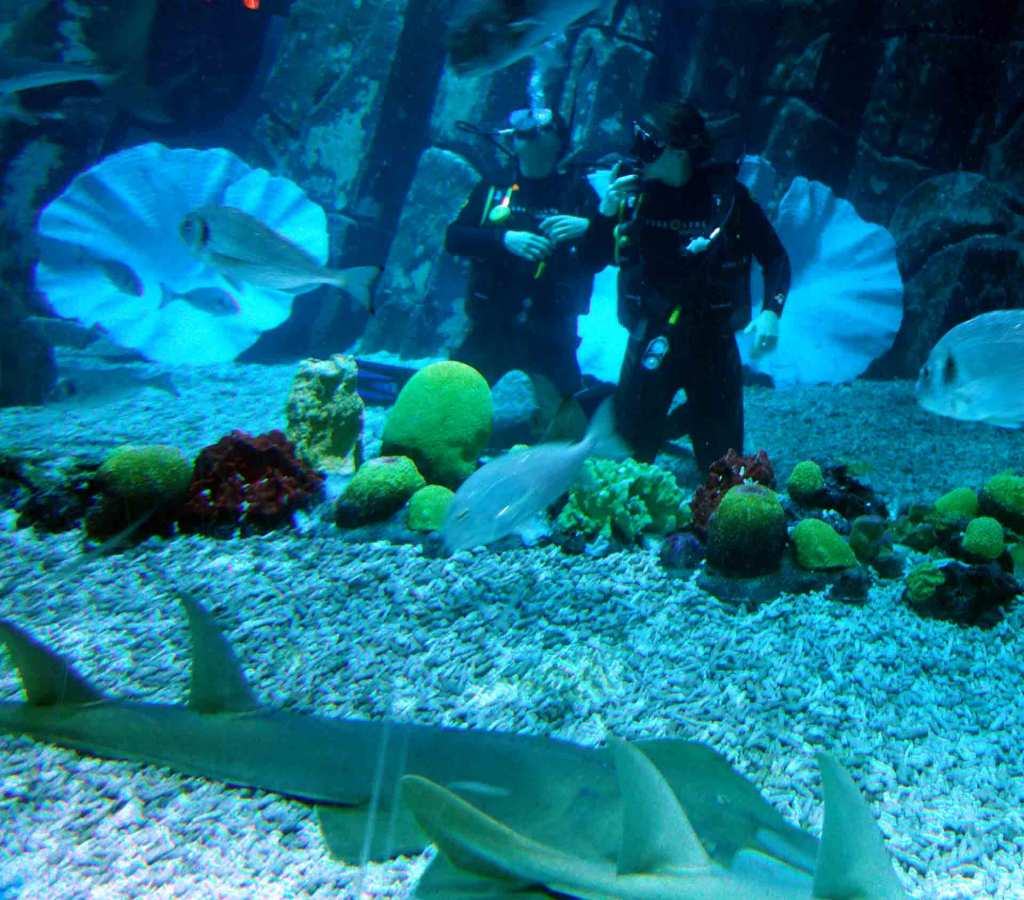 Dubai---diving-Dubai-Mall-Aquarium-(2)