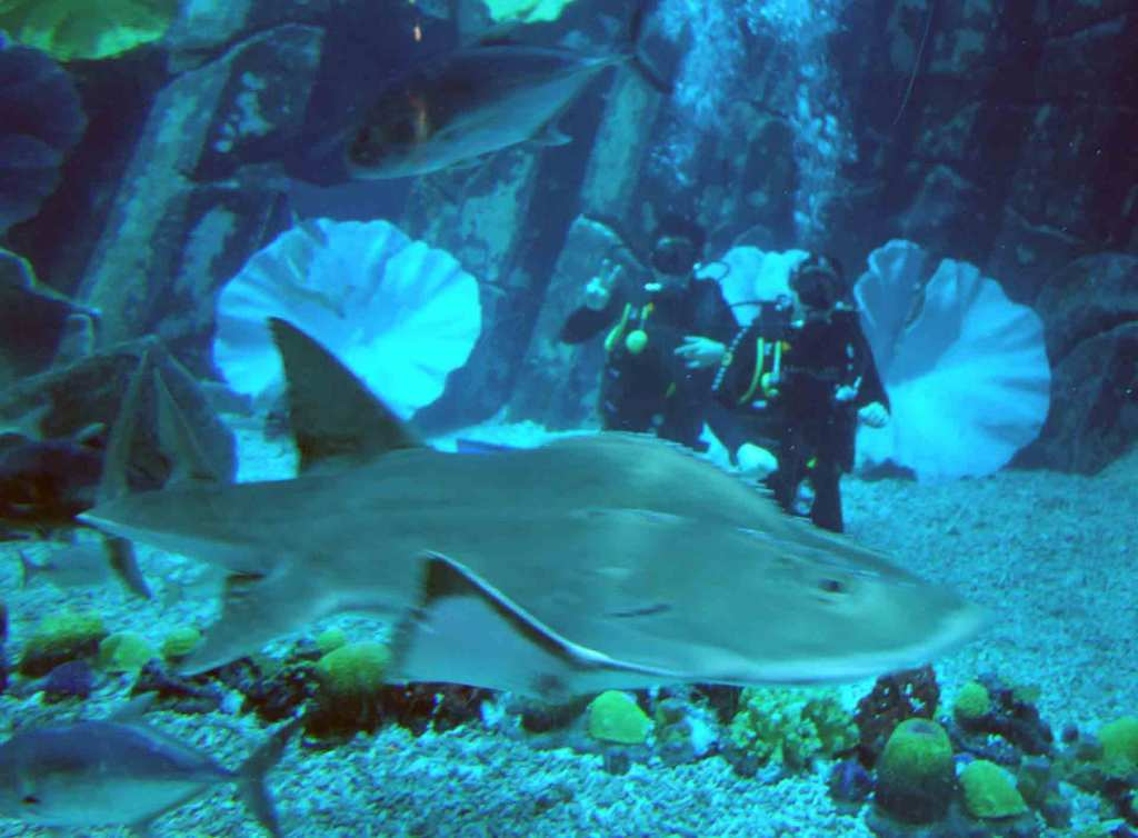 Dubai-diving-aquarium