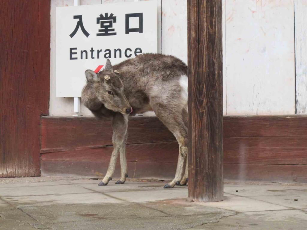 Nara-deer(1)