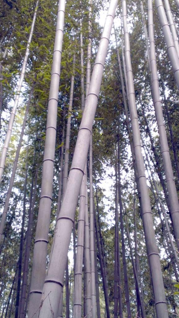 Kyoto-Arashiyama-bamboo-forest