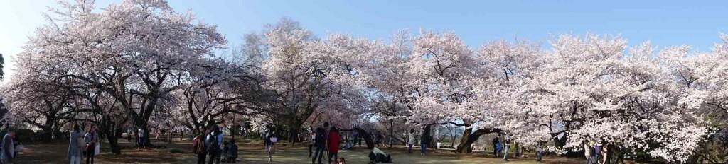 Hanami-Shijuku-goen(1)