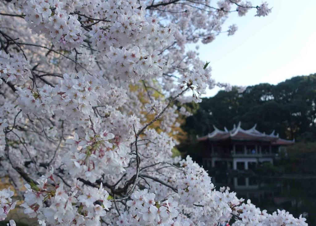 Hanami-Shijuku-goen(2)