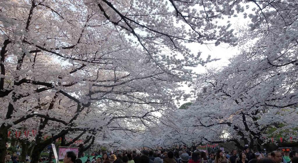 Hanami-Ueno-Park