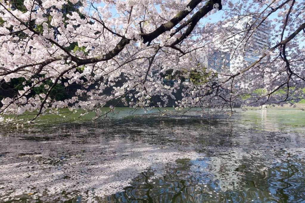 Hanami-chidoriga-fuchi