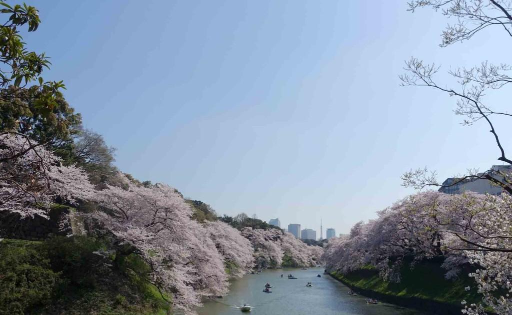 Hanami-chidoriga-fuchi(2)