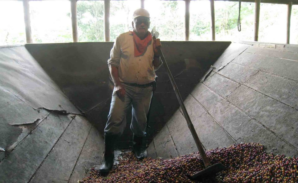 Colombia-coffee-harvesting