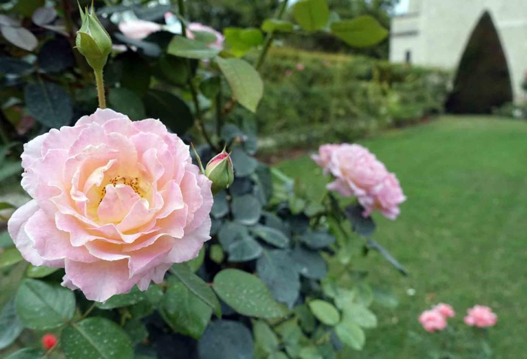Paris-musee-Rodin-(roses)